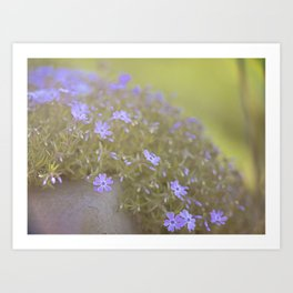purple wildflowers Art Print