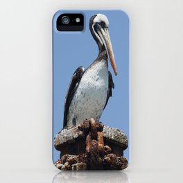 Peruvian pelican (Pelecanus thagus) iPhone Case