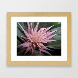 Bromelia en flor Framed Art Print