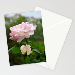 Admiration Pink Rose Nature / Botanical / Floral Photograph Stationery Cards