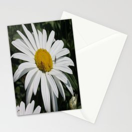 Close Up Common Daisy with Winged Insects Stationery Cards