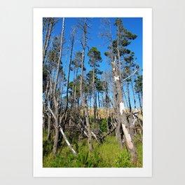 Beach Trees Art Print