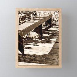 Sunny spot Framed Mini Art Print