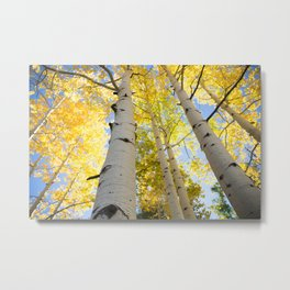 Aspens glowing in the sunlight Metal Print