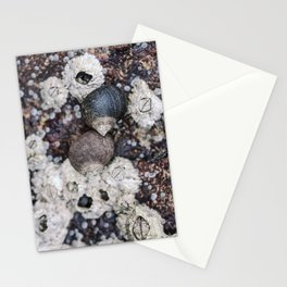 Periwinkles and Barnacles on a rock Stationery Cards