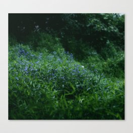Fae Grounds Canvas Print