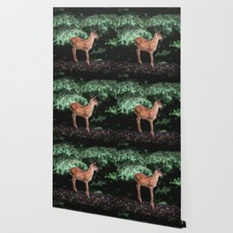 Cute Animals Forest Fawn - Black Tailed Deer Wallpaper