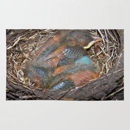 Robin chicks in nest Rug