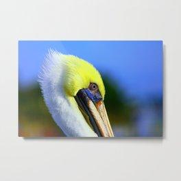 Pelican in Ft. Myers Metal Print