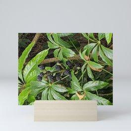 Berries Mini Art Print