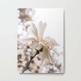 star magnolia Metal Print