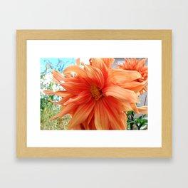 Late Bloom Framed Art Print