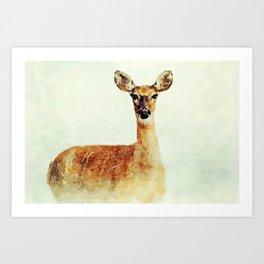 Wild Snow Deer Art Print