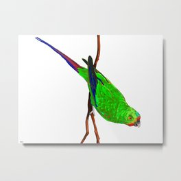 Swift Green Parrot Metal Print