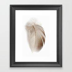 Mallard Feather Framed Art Print