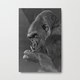 Gorilla Asante Mono Metal Print