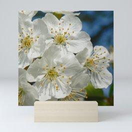 White Cherry Blossoms 01, Spring Mini Art Print