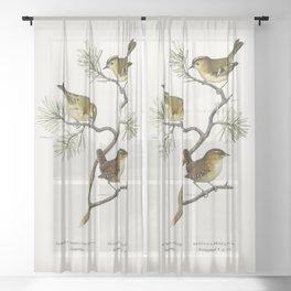 Eurasian wren (Nannus troglodytes) - Goldcrest (Regulus regulus) illustrated by the von Wright broth Sheer Curtain