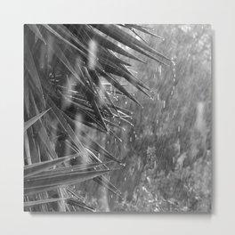 Rainstorm, Spring Storm, Yucca Tree Metal Print