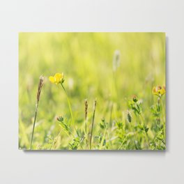 Grasses and Wildflowers Metal Print