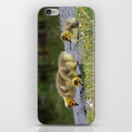 goslings getting their grub on iPhone Skin