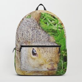 The many faces of Squirrel 5 Backpack