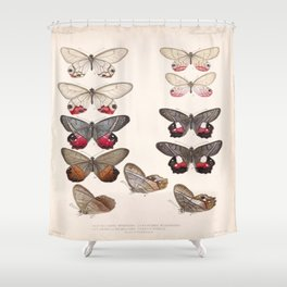 Moths And Butterfly Vintage Scientific Hand Drawn Insect Anatomy Biological Illustration Shower Curtain