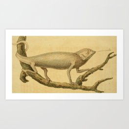Vintage Print - Arcana or The Museum of Natural History (1811) - Chameleon Art Print