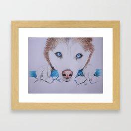 Husky Siberian Framed Art Print