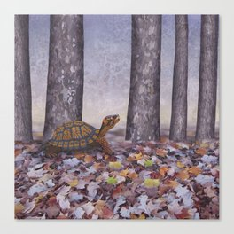 eastern box turtle in the forest Canvas Print