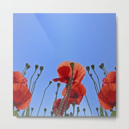 summer poppy IX Metal Print