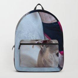 Dog by Juan Gomez Backpack