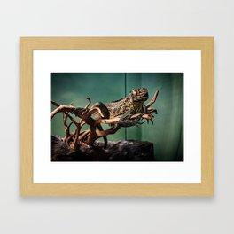 Languid Lizard Framed Art Print
