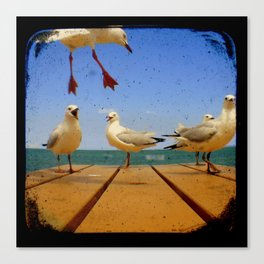 Seagulls - Number 1 from set of 4 Canvas Print