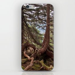 The roots iPhone Skin