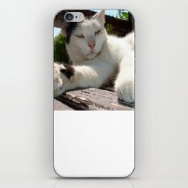 Black and White Bicolor Cat Lounging on A Park Bench iPhone Skin