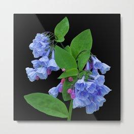 Spring Bluebells on black Metal Print