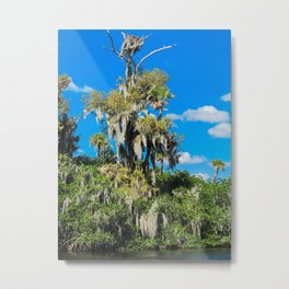 One Big Mossy Tree Metal Print