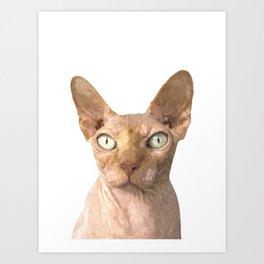 Sphynx cat portrait Art Print