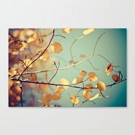golden aspen Canvas Print