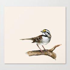 Little Sparrow Canvas Print