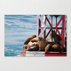 sea lion buoy Canvas Print