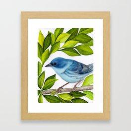 Cerulean Warbler Framed Art Print