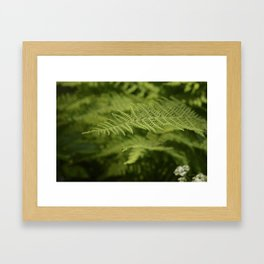Jane's Garden - Fern Fronds Framed Art Print