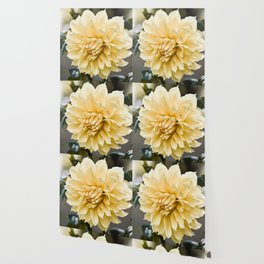 Muted Yellow Dahlia Wallpaper