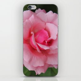 Soft Pink Rose iPhone Skin