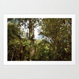 Kauri Tree Reserve in Coromandel Art Print