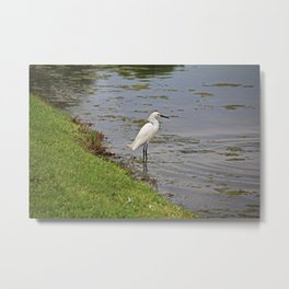 Daylight Haven Metal Print