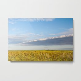Morass grass in sun rising Metal Print