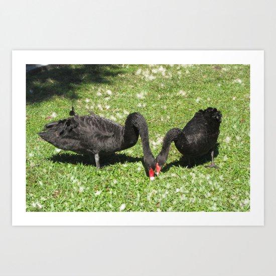 Swans LOVE Art Print